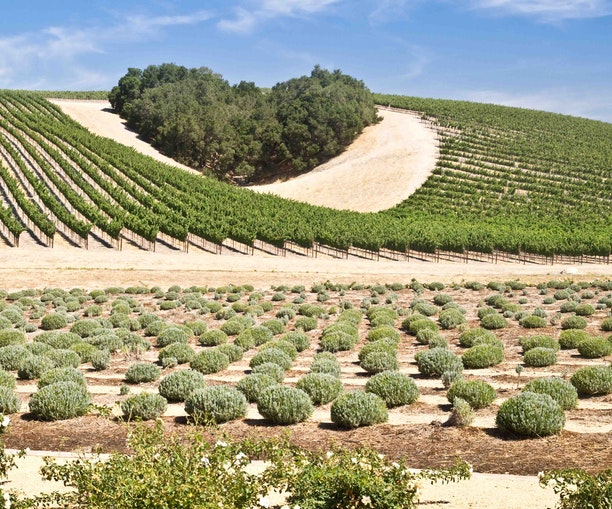 Perfect Pairings on California's Central Coast: Wine and Local Delicacies