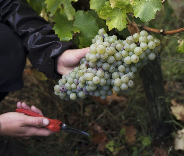 Where to Drink Natural Wine in the Loire Valley