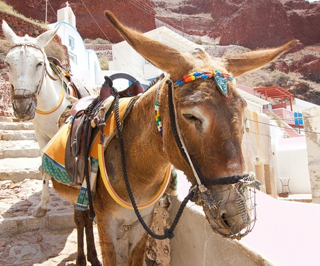 Greece Bans Anyone Over 220 Pounds From Riding Santorini's Donkeys   Greece