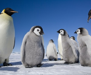 These Adorable Photos of Antarctica's Emperor Penguins Will Warm Your Heart
