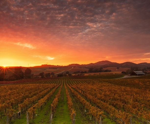 A Love Letter to Northern California Wine Country