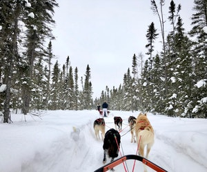 Mushing Mastered: 7 Lessons From a First-Time Dog Sledder