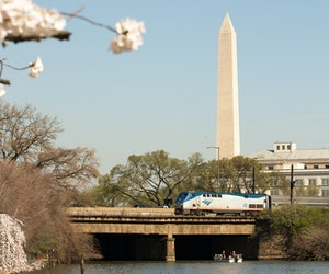 You Can Now Book $19 Amtrak Tickets to D.C. During Peak Cherry Blossom Bloom