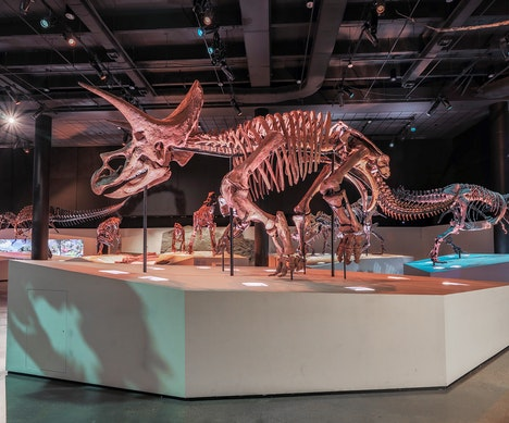 The Best Places to Visit for Dinosaur Lovers of Any Age Houston
