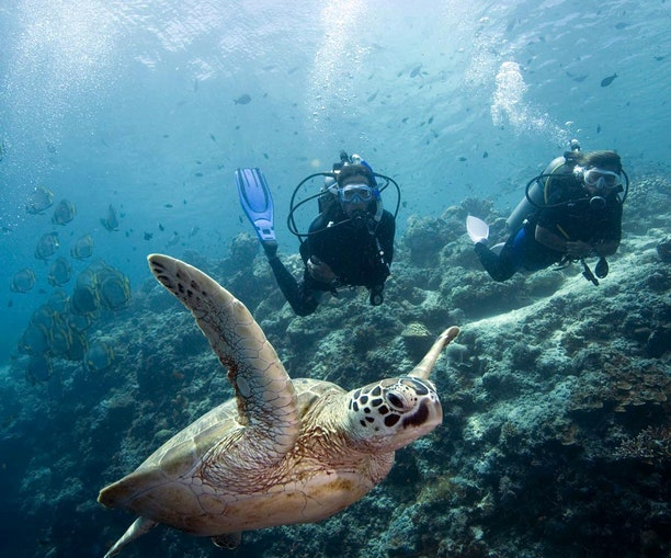 The World's Best Dive Sites for Women