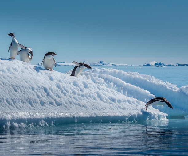 The Science of Antarctica May Change How You Cruise