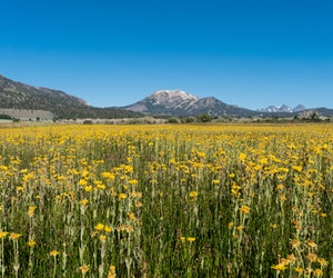 A Wildflower Super Bloom Is Heading to the Sierras