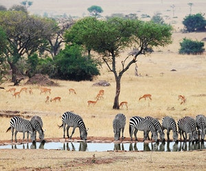 The Future of Africa's Wild Places—and Why Safaris Matter