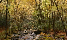 Guide to the Great Smoky Mountains