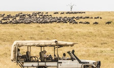 Why You Can (and Should) Take a Serengeti Safari Alone