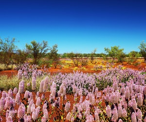 One of the World's Most Spectacular Wildflower Blooms Isn't Where You Think It Is