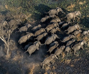 Kenya's Imperiled Wildlife Conservancies Receive Financial Lifeline