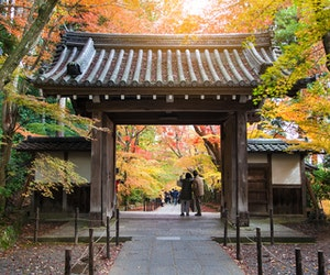 Why You Should Go to Kyoto This Fall