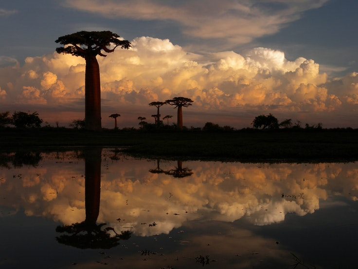 Madagascar is an often-overlooked travel destination perfect for nature lovers.