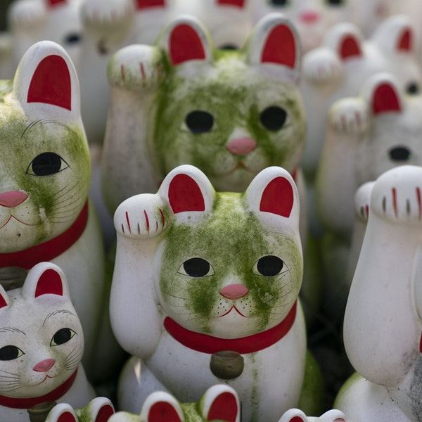 "Inside Tokyo's Buddhist Temple Devoted to ""Lucky"" Cats"
