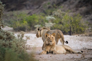 Close Encounters of the Wild Kind in Namibia's Desert
