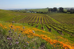 5 California Wine Country Experiences You Need to Book Now
