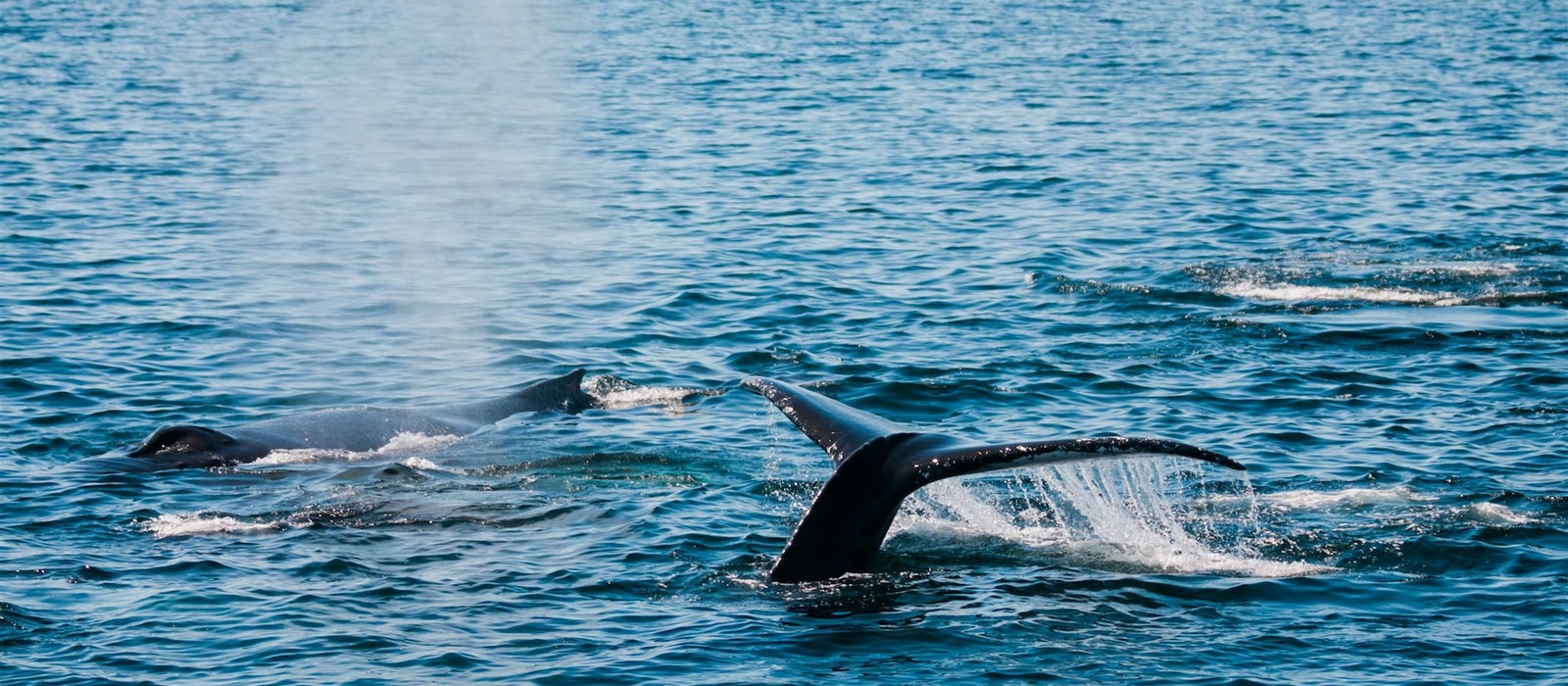 The International Fund for Animal Welfareand Kin Travel are offering a special conservation class in Provincetown, Massachusetts,dedicated to saving marine mammals off the coast of Cape Cod.