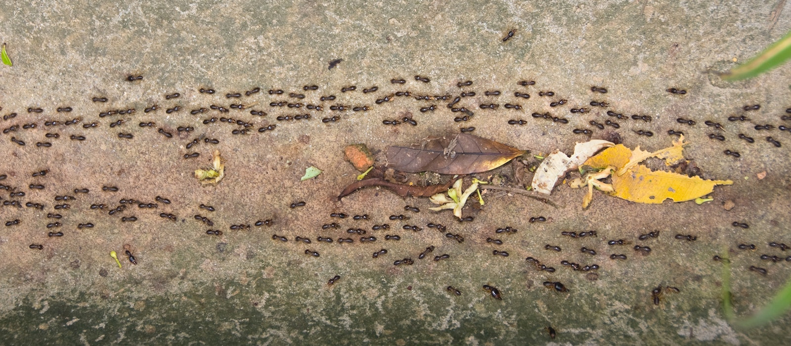 """Studying ant colonies'use of """"swarm intelligence"""" to navigate terrain is informing airline boarding strategies."""