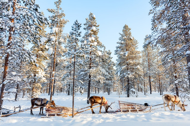 Reindeer rides are a popular way to explore Lapland—and not just for Santa.