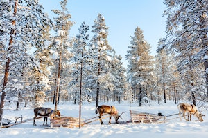 Why Finnish Lapland Is the Ultimate Winter Destination