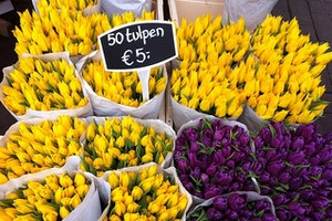 Where to See the Most Beautiful Spring Flowers in Amsterdam (Yep, That Means Tulips)