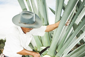 The Rise of Mezcal: Great for Cocktails, Better for Oaxaca