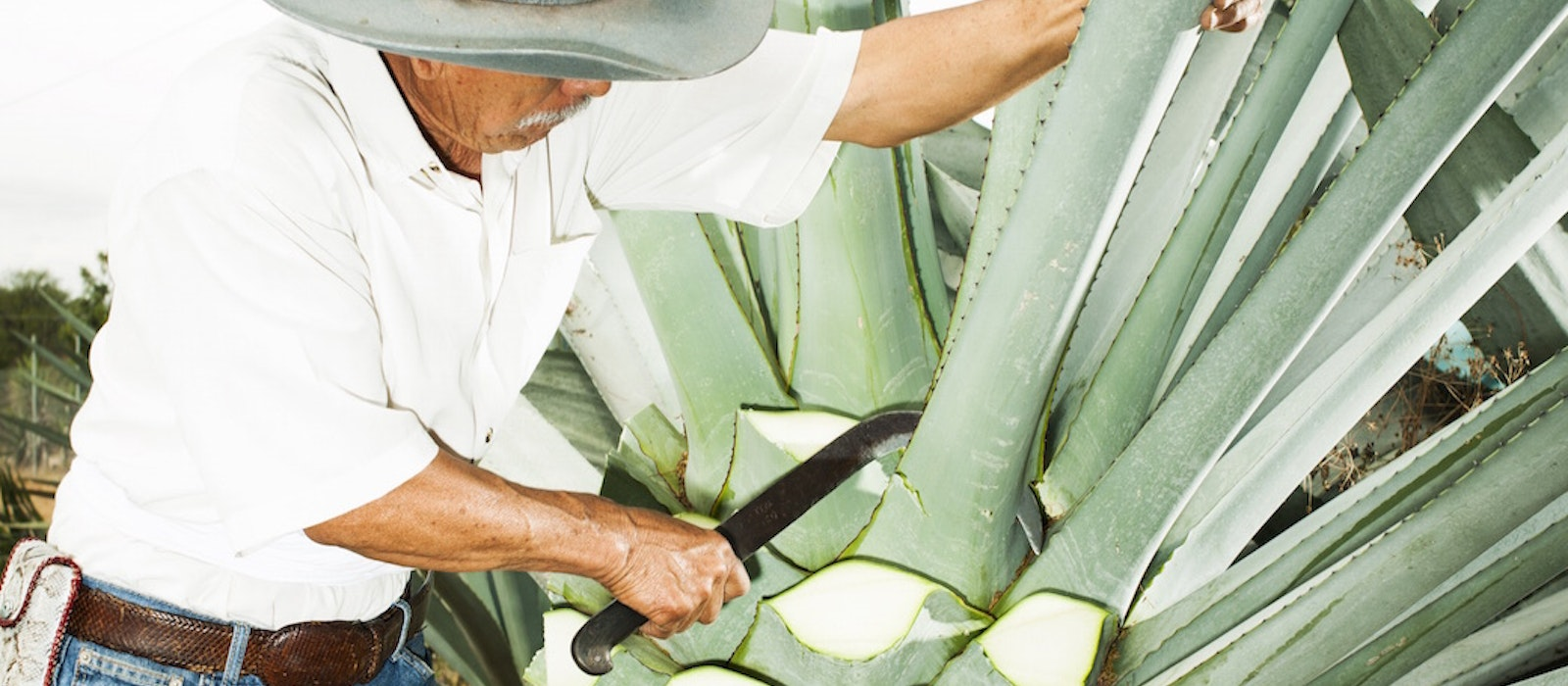 In Oaxaca, mezcal harvesting and production methods are passed down from generation to generation.