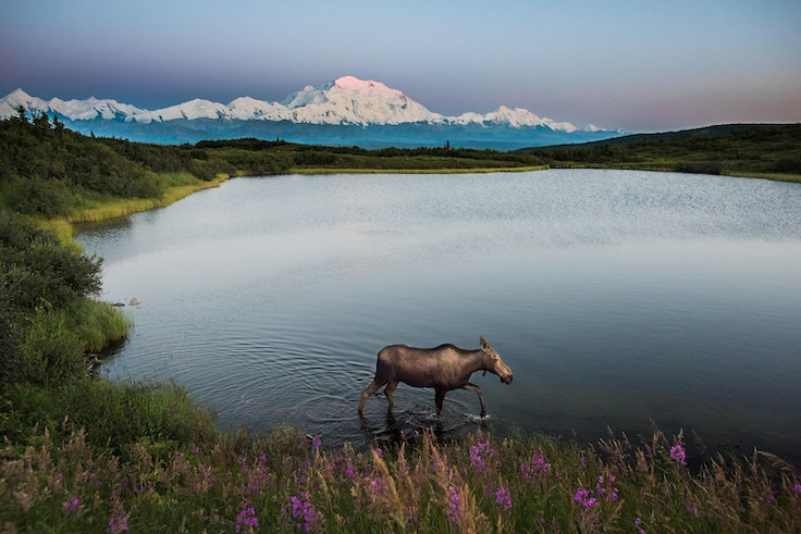 Alaska's Denali National Park is one of the largest national parks in the U.S., with ample space for wildlife encounters and happy memories.