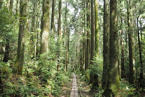 6 Majestic Places to Hike in Japan