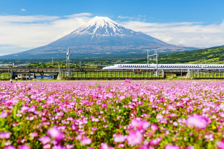 Fields of moss phlox blossom along the Tokaido Shinkansen Line each spring in Japan.
