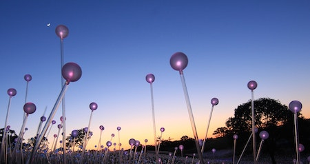 "An ""Electric Bloom"" of Light Installations Will Take Over This Botanical Garden in Spring"