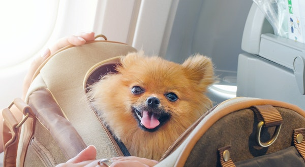 Emotional Support Animal Ban Could Come Into Effect on Planes Soon