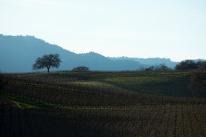 Two Magical Days in the Napa Valley with AFAR