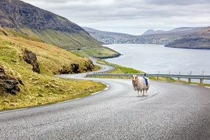How a Herd of Sheep Put the Faroe Islands on the Map