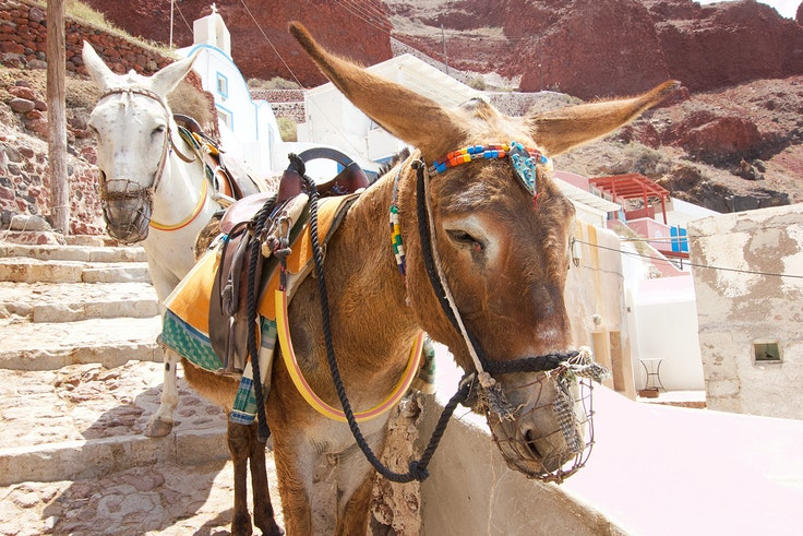 Animal rights activists successfully lobbied to make living conditions better for Santorini's donkeys.