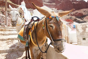 Greece Bans Anyone Over 220 Pounds From Riding Santorini's Donkeys