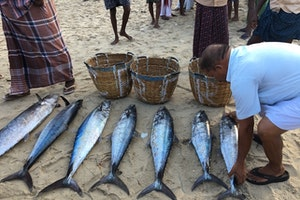 A Fish Market on the Beaches of India