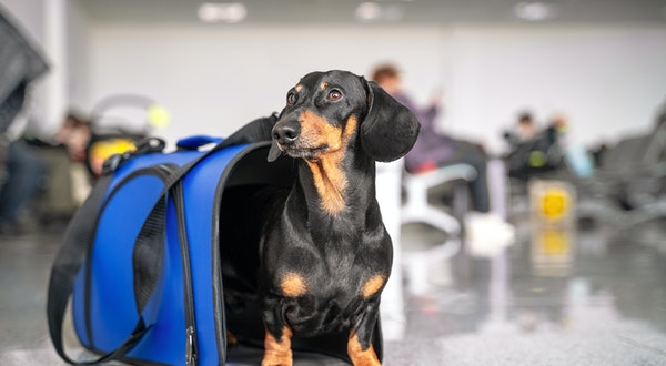 U.S. Government Bans Emotional Support Animals From Flying for Free