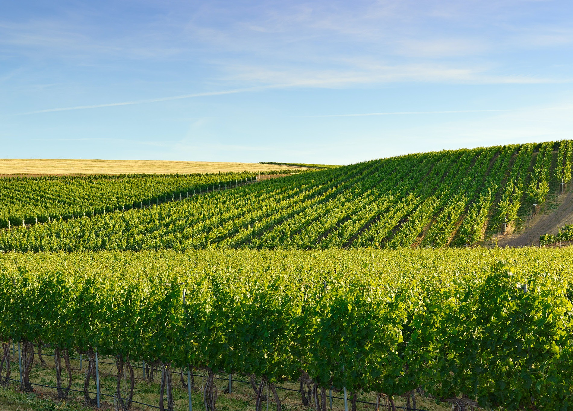 The Best Wineries in Washington State