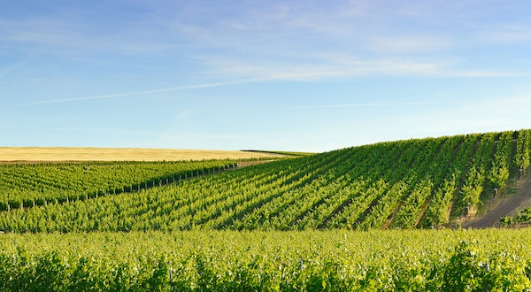 6 of the Best Wineries in Washington State