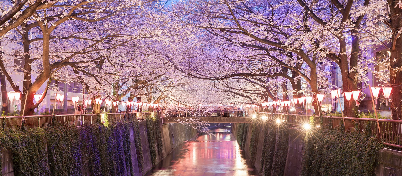 While cherry blossoms can be seen elsewhere in the city, the nighttime reflection of the trees along the Meguro River adds extra magic.