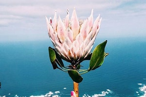 An Instagram Tour of South Africa in 8 Beautiful Photos