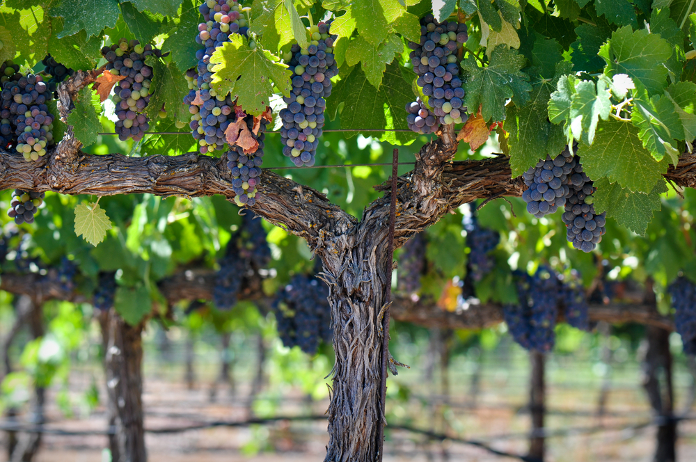 Everything You Need to Know About Winetasting in Napa Valley