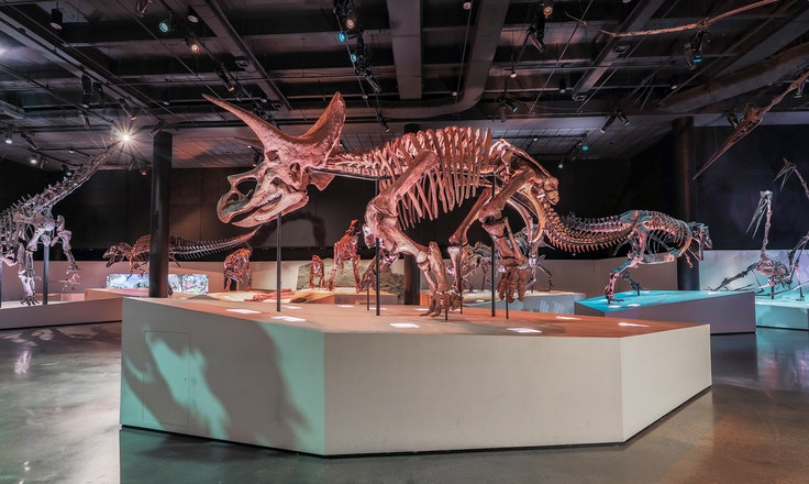 """At the Houston Museum of Natural Science, you can meet """"Lane,"""" a mummified Triceratops skeleton."""
