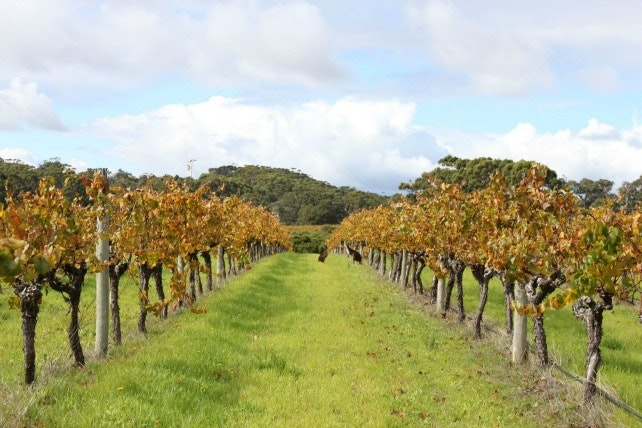 Everything You Need to Know About Australia's Coolest Wine Regions