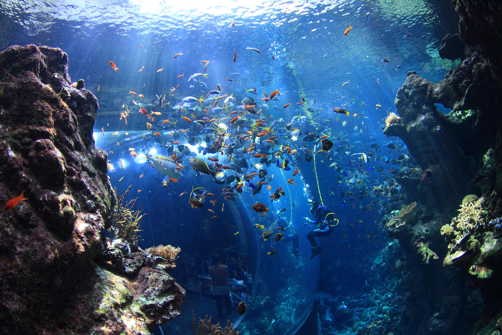 The 8 Best Aquariums In California