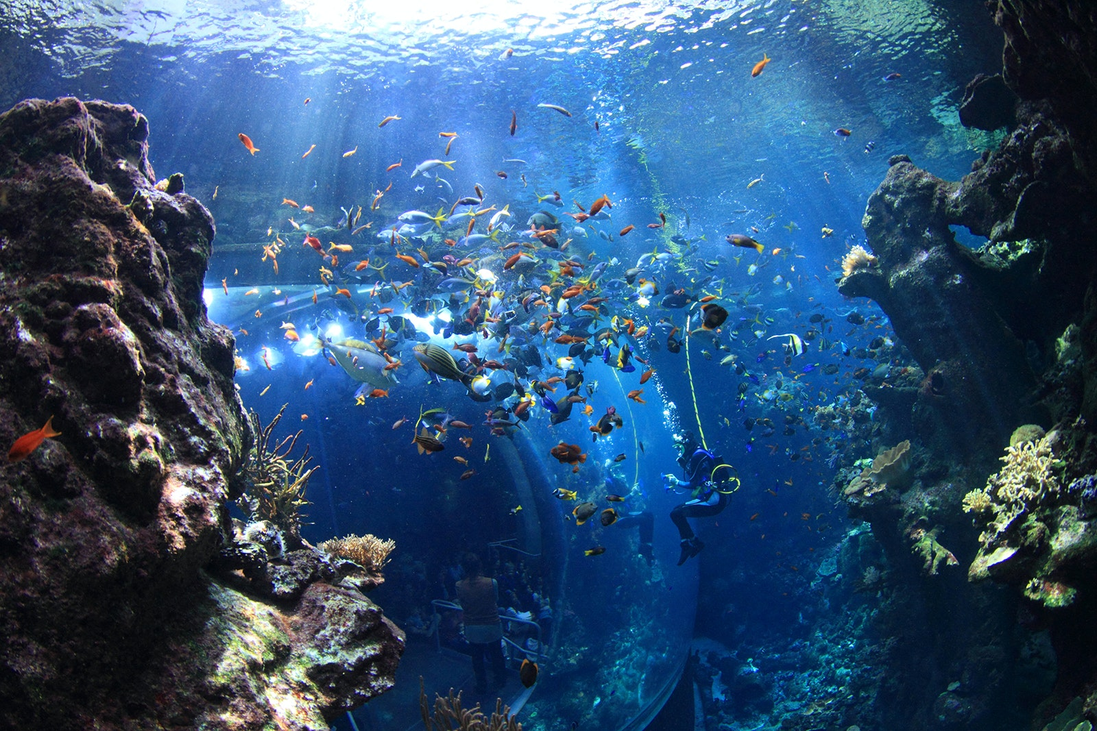 Sea Otters, Penguins, and Sharks, Oh My! California's Best Aquariums
