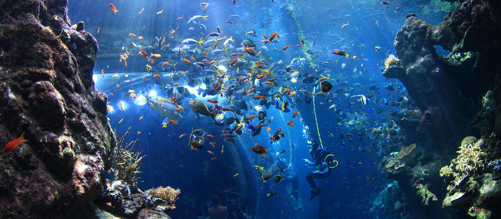 You can see the world's largest living indoor coral reef in Golden Gate Park.