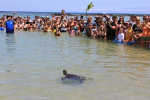 See the Turtles of Hawaii Celebrate Their Own Independence Day